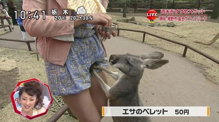 【放送事故エロ画像】偶然か必然か!?テレビでおこったエロハプニング! 16